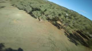 Tree tops and Bass drops - FPV Freestyle
