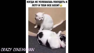 Смешные коты и не только 2019