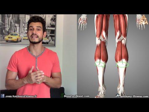 Comme se reposent les muscles