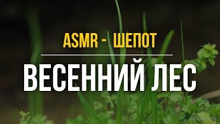 ASMR male whisper before bed – Spring Forest (Russian speech) #102