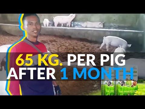 , title : 'Pig farm of Rogelio Gonzales from Leet, Santa Barbara, Pangasinan