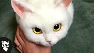 10 МИЛЫХ ЖИВОТНЫХ КОТОРЫЕ МОГУТ ВАС УБИТЬ [Белый кот]