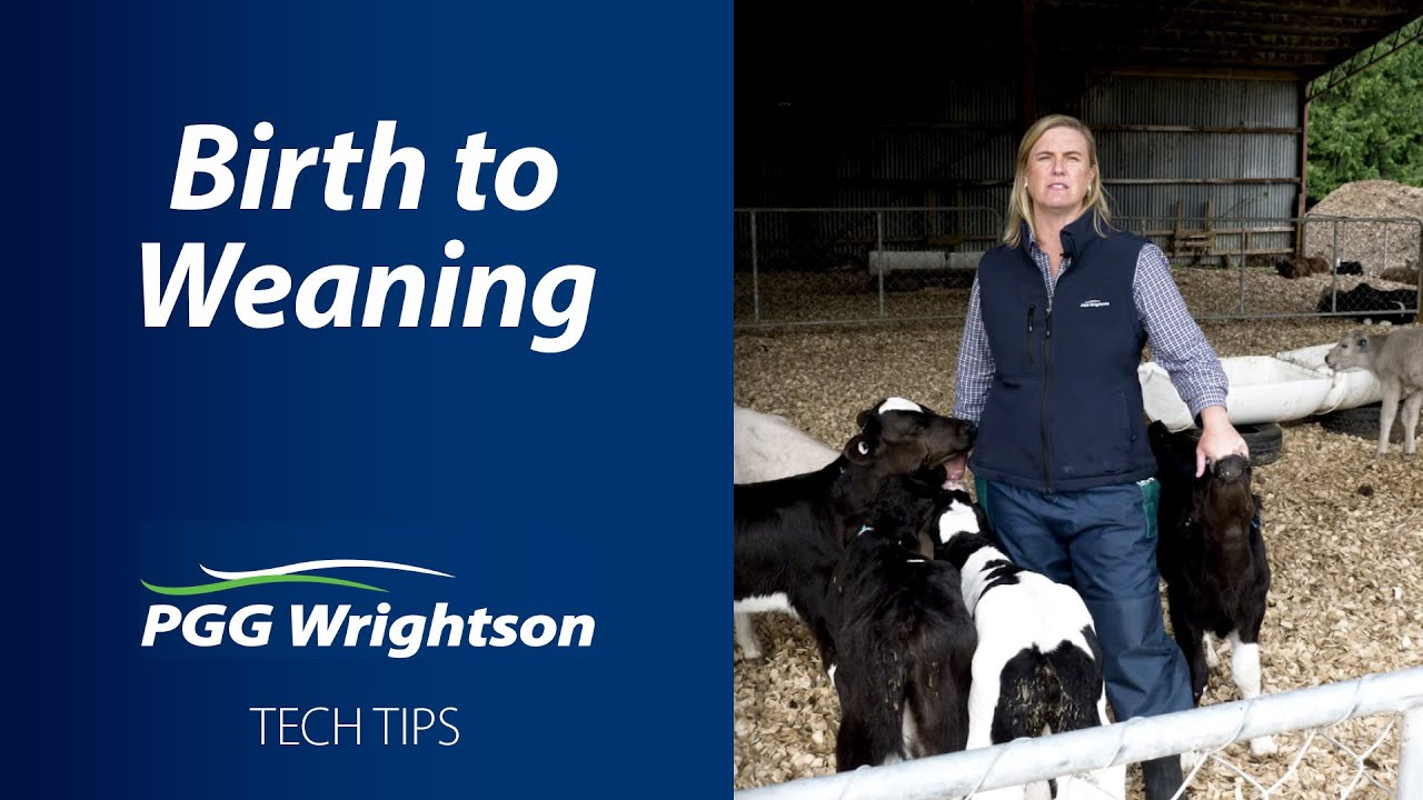 PGG Wrightson | Calf Rearing | Birth to Weaning