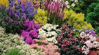 Small Perennial Garden Layout
