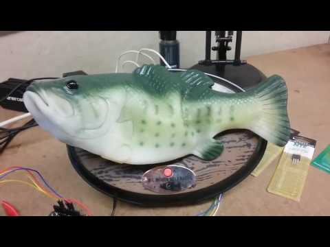 Guy Rewires Amazon Alexa into Billy Bass Fish