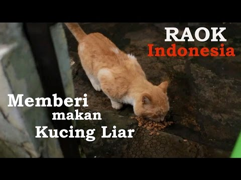 Video RAOK Indonesia #1 | Feeding Stray Cat | Memberi makan kucing liar