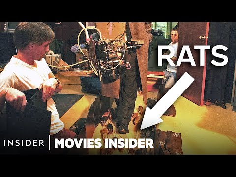 These Rats Are Real Movie Stars!