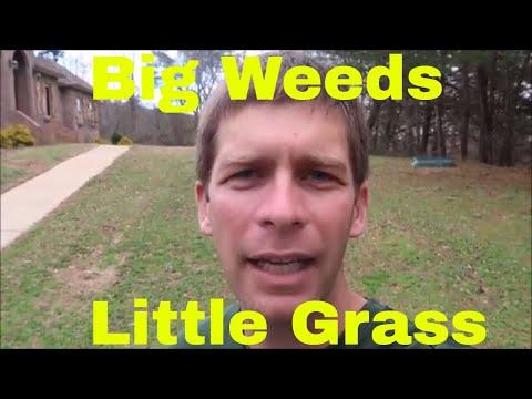 Ugly, Weedy Lawn Repair - Part 1 is Weed Control