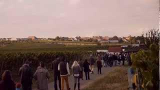 preview picture of video 'Kulinarische Weinwanderung Freinsheim'