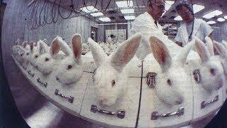 Мы не подопытные кролики! Режиссер Галина Царёва - YouTube