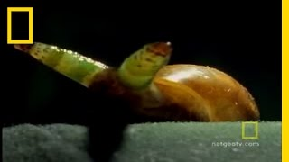 Snail Zombies | National Geographic thumbnail