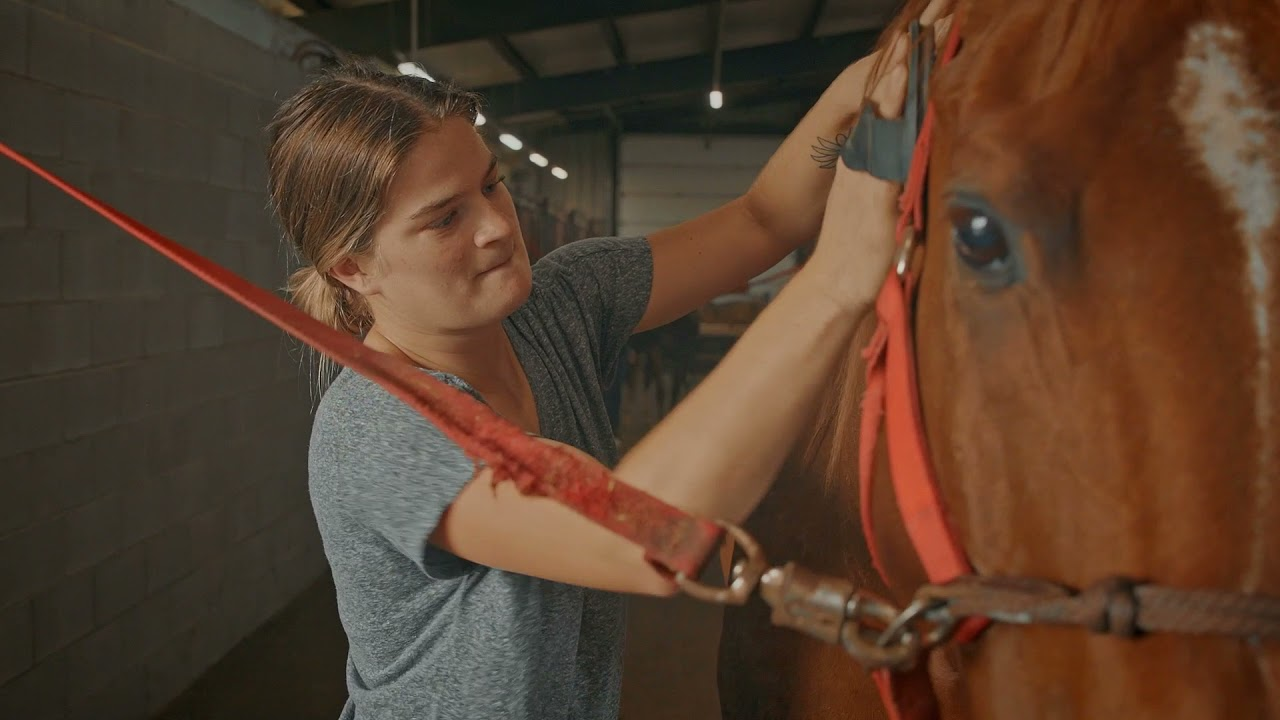 View from the Hill - Equestrian Team making a comeback  Video Preview