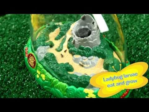 Youtube Video for Ladybug Growing Kit - Raise Your Own