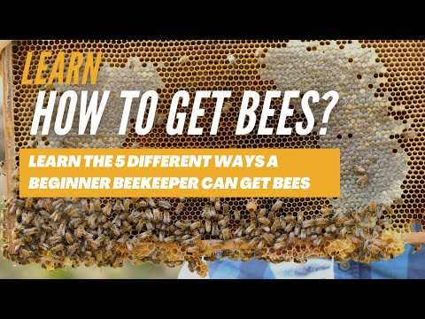 , title : 'How to get Bees? - Learn the 5 different ways a Beginner Beekeeper can get bees