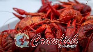 2020 Crawfish Season Starts Big