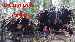 ชมวิถีชีวิต ความเป็นอยู่ของชนเผ่ามานิ(ซาไก) ในป่าทึบบนเทือกเขาบรรทัด
