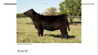 Online Livestock Judging: Class 2 Angus Heifers
