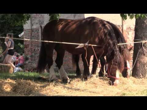 Preview video Ivrea: San Savino 2016, intervista all´assessore Giovanna Strobbia