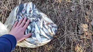 Весенняя рыбалка уклейки на удочку в пермском крае