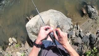 Осенняя Рыбалка l Горная речка БЕЛОКУРИХА