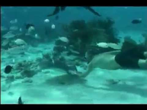 0 Swimming with Sting Rays
