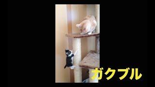 子猫が初めてキャットタワーに登る