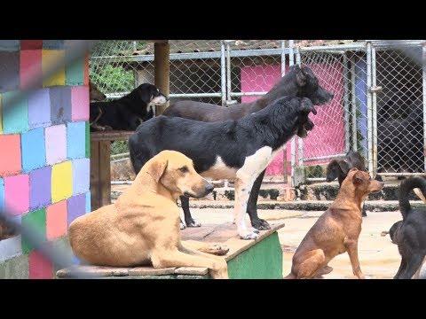 Castração é fundamental no controle da superpopulação de animais de rua
