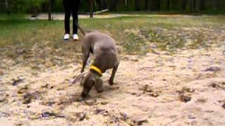 Отдам щенка, собаку в хорошие руки бесплатно!