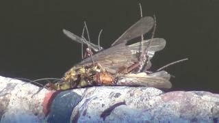 О клеве рыбы и насекомые