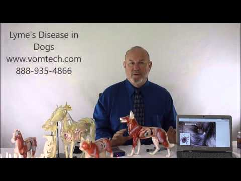 Video Lyme's Disease in Dogs