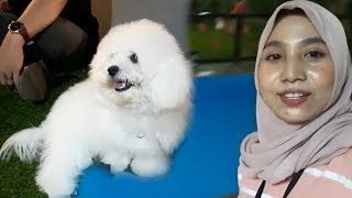 Paws di Mal Kelapa Gading Tawarkan Tempat Bermain Khusus untuk Anjing Kesayanganmu
