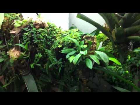 Dart frog / orchid vivarium