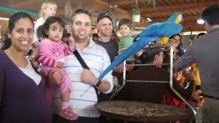 preview picture of video 'חוות התוכים כפר הס - חוהמ פסח תשעא - Parrots farm in Kfar Hess'