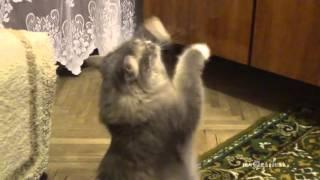 Dancing cat / Танцующий кот - Video Youtube