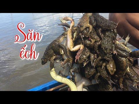 Xem nông dân miền Tây săn ếch mùa nước nổi