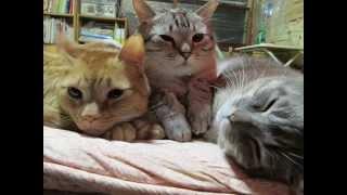 NHKEテレ0655『おれ、ねこ』WAGAMAMA四兄弟スペシャルバージョン♪
