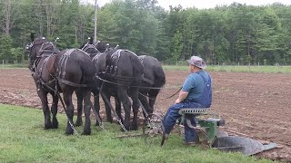 Horse Drawn Plowing  and Hitching 3-Up with Ralph Rice
