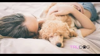 Should You Let Your Dog Sleep in the Bed?