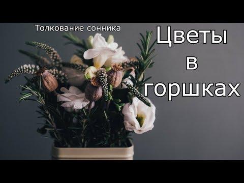 Цветы в горшках - толкование сонника
