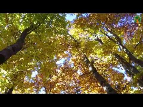 Preview video La Majella in autunno