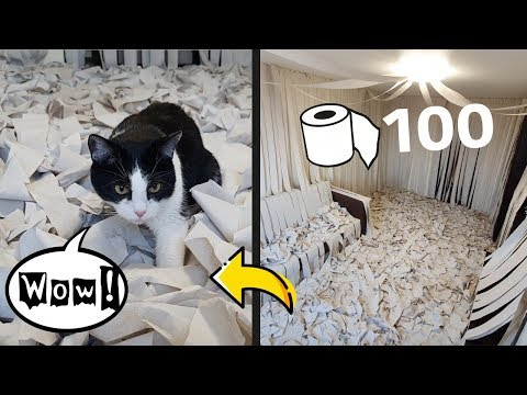 שימוש יצירתי בגלילי נייר כדי לשעשע את חתולכם
