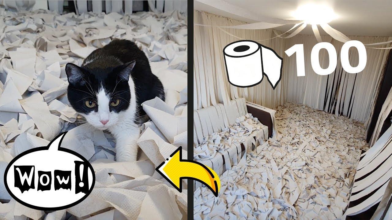 Кот Пусик и 100 рулонов туалетной бумаги