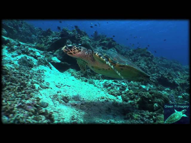 Scuba Diving at Apo Reef, The Philippines hd 2011
