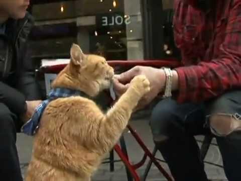 Jornal Nacional 09/07/12 Gato Bob ajuda músico a se livrar das drogas