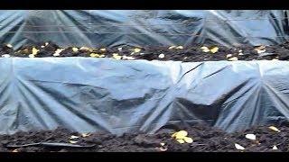Легкий и надежный способ укрытия винограда на зиму видео
