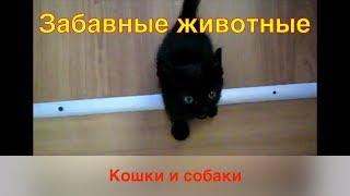 Забавные животные - кошки и собаки - смешная подборка (cats & dogs) 001