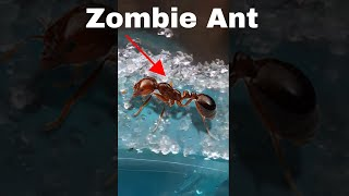 Making an Ant Think It's Dead