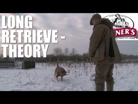 Gundog training tips – How to get your dog to do long retrieves