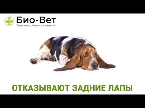 У Собаки Отказывают Задние Лапы - Что Делать? // Сеть Ветклиник Био-Вет