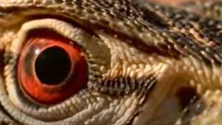 Lizards, Snakes and Poisonous Animals Roaming the Deserts of Australia | BBC Studios
